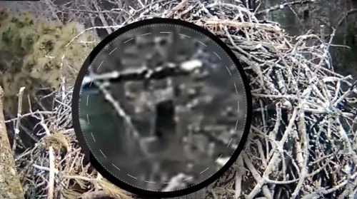 Eagle Cam Captures Bigfoot -- Or Something Else -- Walking Around