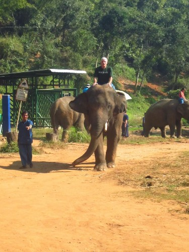 Thailand Journal: They Shoot Elephants, Don't They?