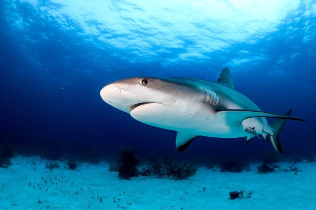 We've Finally Recreated The Incredible 'Sixth Sense' That Sharks Have