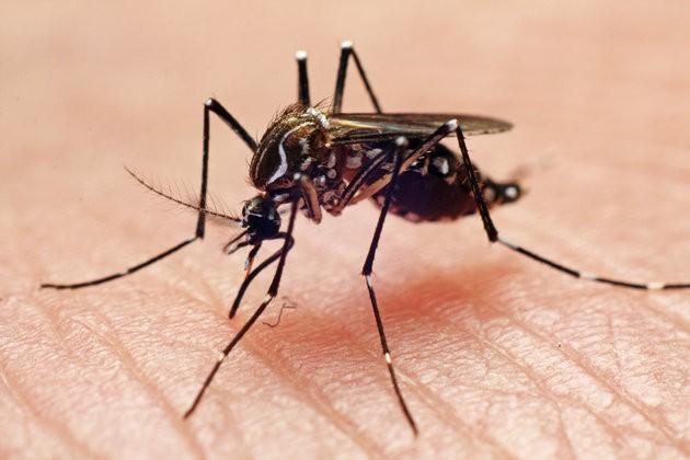 Hot Zone Diseases/Virus' - cover