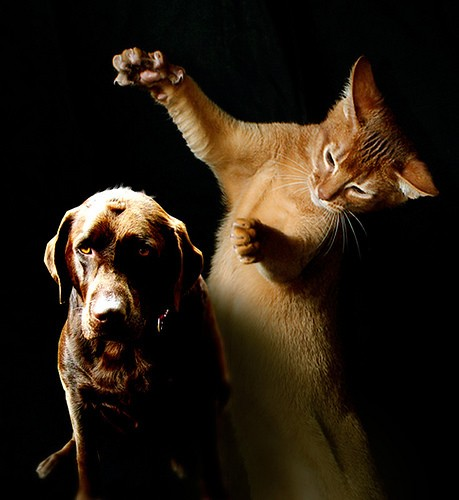 What Your Dog Really Wants To Tell You About The Cat
