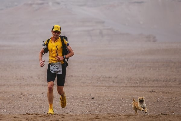 ゴビ砂漠マラソンで、1匹の犬はランナーを追って走った。本当にあった運命の出会い