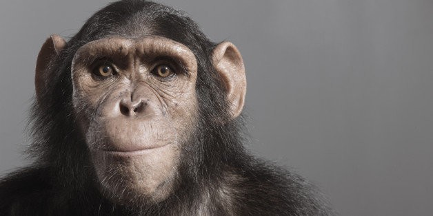 If You Think Humans Have Chimps Beat, This Study Will Have You Rethinking Your Theory