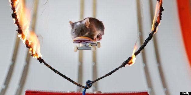 Skateboarding Mice: Shane Willmott Trains Rodents To Ride (PHOTOS)