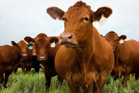 McDonald's Commits to Buying Sustainable Beef