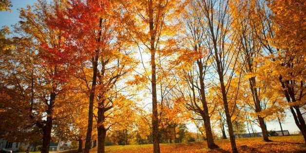 Fall Foliage Predictor Is Our New Favorite Thing About The Season | HuffPost Life