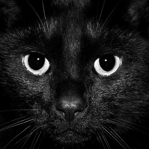 Dear Human: A Letter From Your Cat