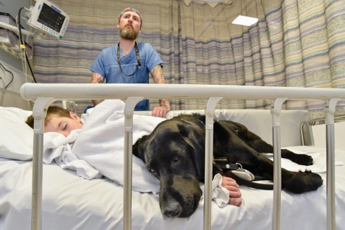 Moving Photo Shows Service Dog Comforting Boy With Autism On Hospital Bed
