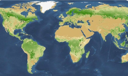 How Many Trees Does Earth Have? New Study Yields Big Surprise