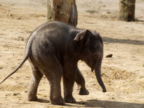 Cute Baby Animals in City Zoos (PICTURES)
