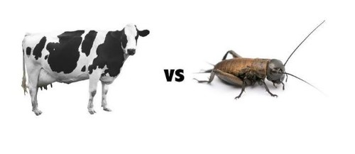 It's Healthier To Eat A Bug Than It Is To Eat A Steak