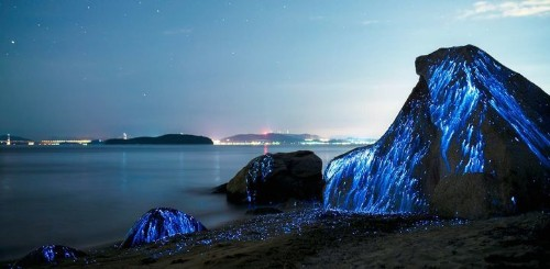 5 Bioluminescent Beaches That Will Blow Your Mind   HuffPost Life