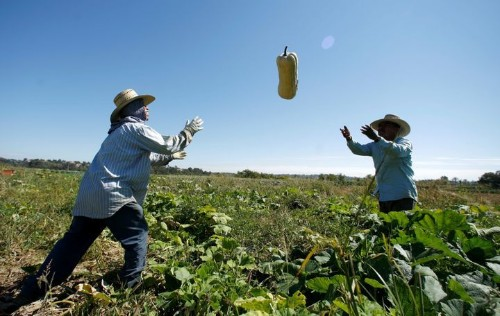 Organic Farming Could Feed The World, If Only We Would Let It