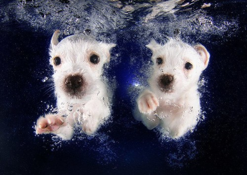 This Photographer Taught 1,500 Puppies How To Swim. These Are The Impossibly Adorable Results.