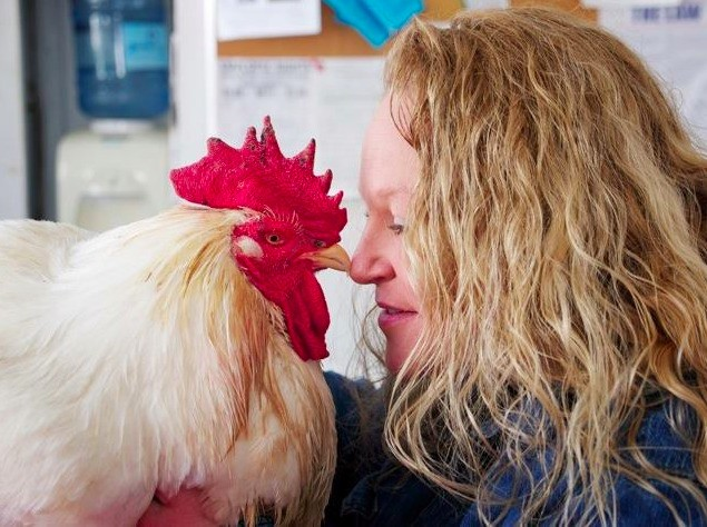 On Bittman and Kristof, Salmonella and Chickens