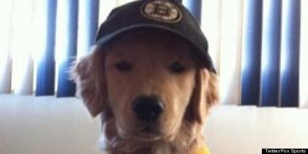 Ray Charles, Blind Golden Retriever Puppy, To Drop Boston Bruins Playoff Puck? There's A Petition