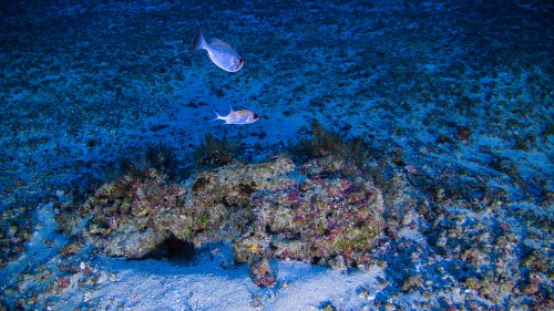The Amazon Reef That Keeps Being Discovered