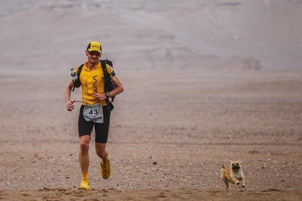 Tiny Stray Dog Finds Her Human When She Joins Him For 77 Miles In Race