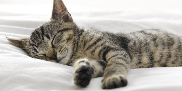 Why Do We Feel Tired After A Good Night's Sleep?