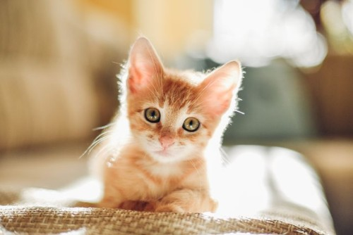 Chrome Extension Replaces Pictures Of Donald Trump With Kittens