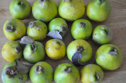In Praise of Quince