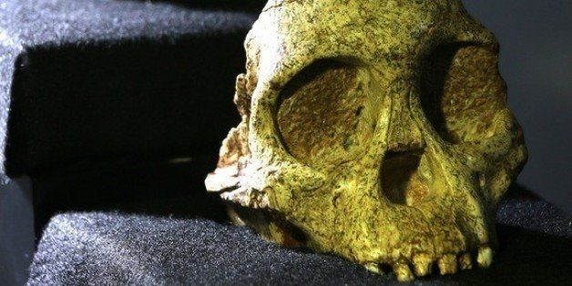 Scans Of 'Taung Child' Skull Show Human Ancestor's Brain Didn't Grow Like Our Own