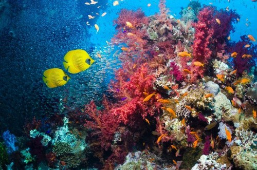 Sunscreen Could Be Killing The World's Coral Reefs, Study Says