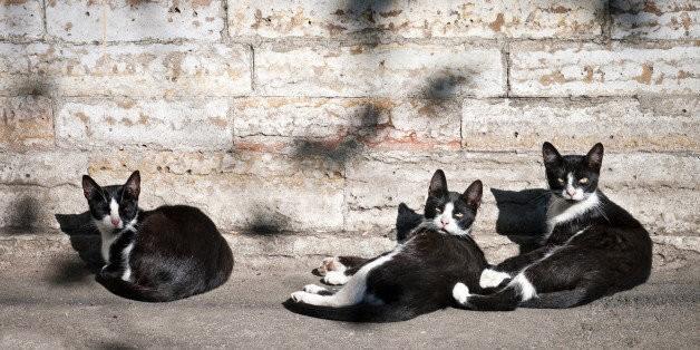 The Mainstream Standard of Community Cat Care Is Trap-Neuter-Return