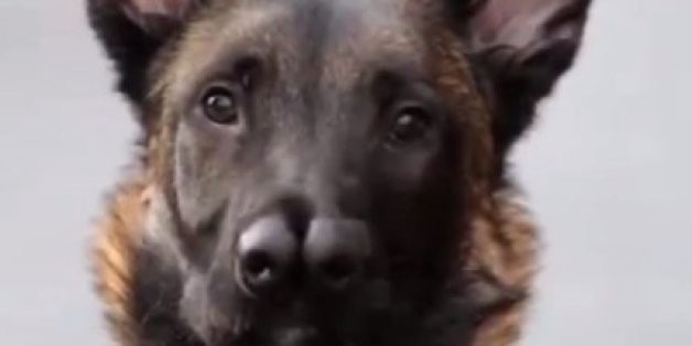 Snuffles, The Dog With 2 Noses, Sniffs Out New Home