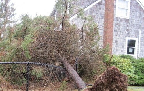 This Is What Happens When Your Neighbor's Falling Tree Damages Your House
