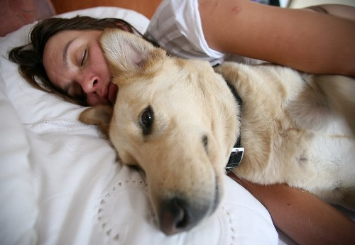 Will Sleeping with Your Dog Make Him Aggressive?