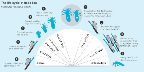 Lice: The New Four-Letter Word