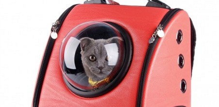 These Cat Backpacks Will Never, Ever Leave You Lonely