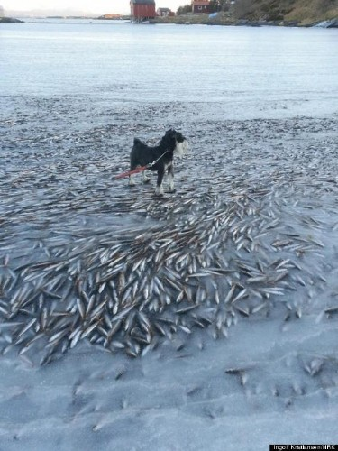 Guys, It Was So Cold In Norway Last Weekend That A School Of Fish Froze In Place (PHOTO)