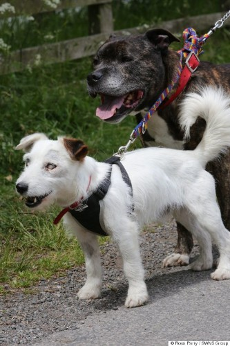 Blind Rescue Pooch And 'Guide Dog' BFF Are Inseparable. They Also Need A Loving Home