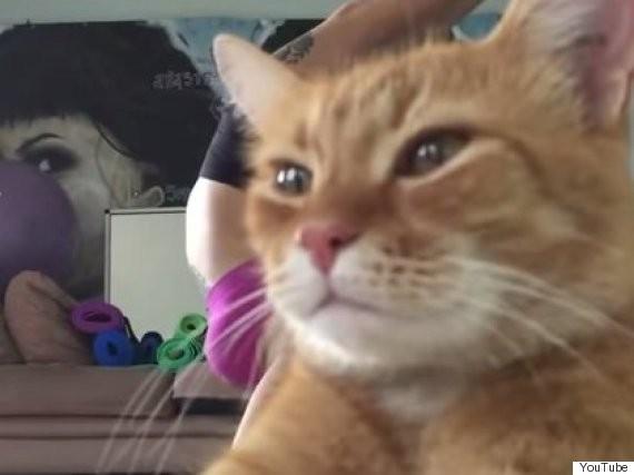 Arrogant Cat Is Not Impressed By Yoga