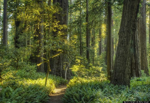 21 Reasons To Celebrate The Value Of Trees In Honor Of International Day Of Forests