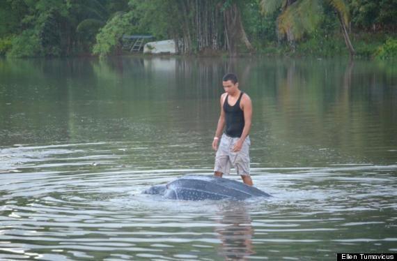 Elias Pereira Saves Leatherback Sea Turtle In Grande Riviere Beach, Trinidad (PHOTOS)