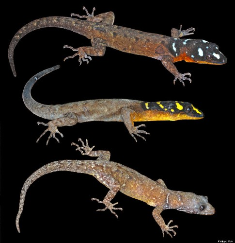 Hundreds Of New Species Discovered In Remote Part Of Amazon Rain Forest (PHOTOS)