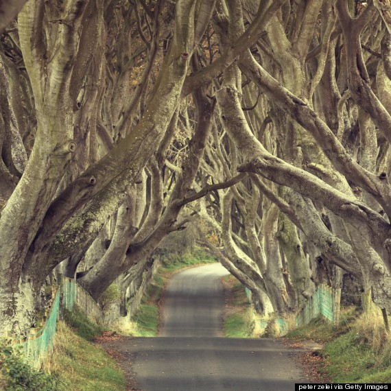 Ireland's Dark Hedges Is The Most Mystifyingly Cool Road Ever