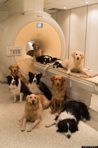Dog Brains Process Voices & Emotions Just Like Humans, Study Finds