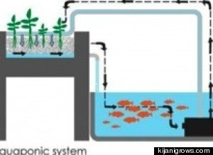 Aquaponics - Farming For Change