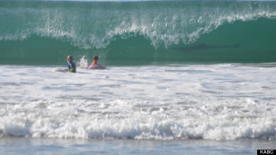 Shark Photobombs 2 Boys At California Beach