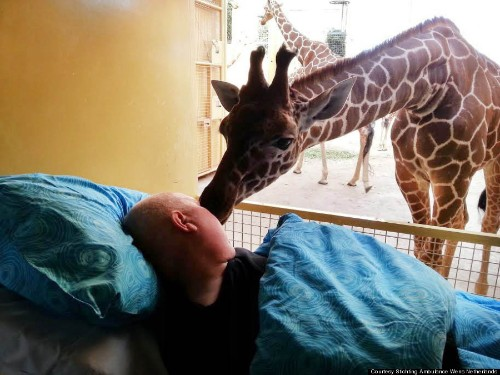 Giraffe Shares Touching Goodbye With Dying Zoo Worker (PHOTO)