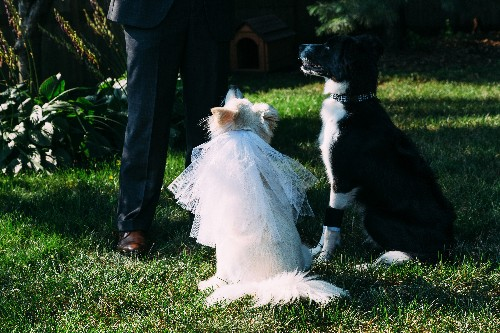 These Furry Friends Made Their Love Official In The Cutest Canine Wedding Ceremony