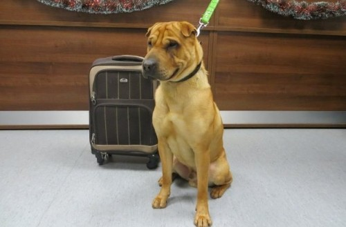 Adoption Inquiries Pour In For Dog Abandoned At Train Station With Suitcase Of Belongings