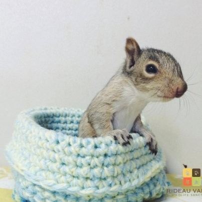 These Adorable Knitted Nests Are Helping To Keep Injured Baby Animals Safe