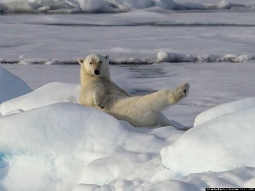 Polar Bear Works It (PHOTOS)