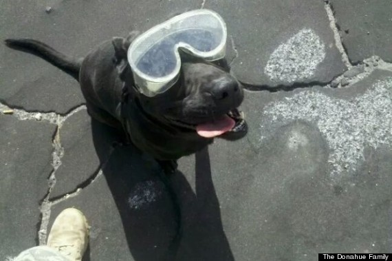 Retired Bomb-Sniffing Dog Will Get Life-Saving Surgery
