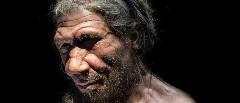 Discover neanderthal genes